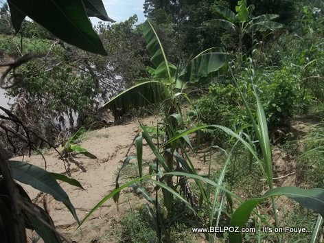 Farm land devastated by Guayamuco river - La Begue Haiti