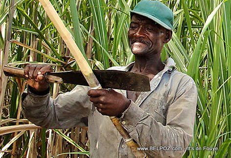 Haitian Sugar Cane Field Worker in the Dominican Republic