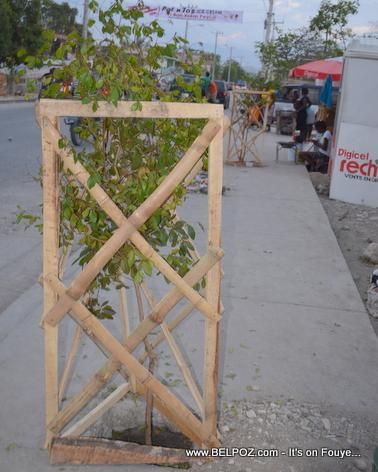 Gonaives - Route Nationale No1 - Pye bwa plante nan 2 bord...