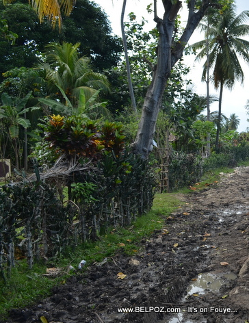 This looks like the Countryside of Haiti, just a few minutes from the city...