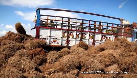 Vetiver Transport - Les Cayes Haiti