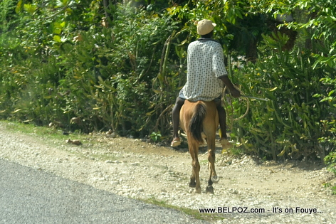 Haiti - A mule is still a favorite Mode of transport