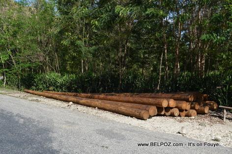 Haiti - Wood utility poles laying along the road near La Chapelle
