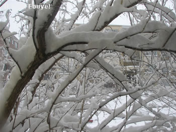 snowflakes in the trees