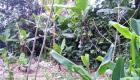 zoological garden fermathe