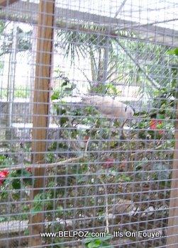 a zoo in haiti