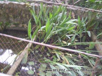 Haiti zoological garden