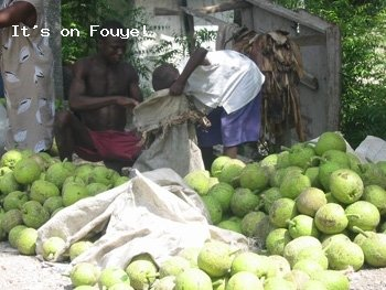 Why Do Haitians Eat Breadfruits