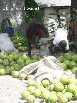 Lame Veritable, Breadfruits