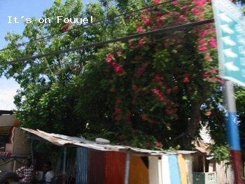 Arcahaie to Port-au-Prince 6 Apr 04
