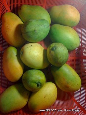 Haiti Mango