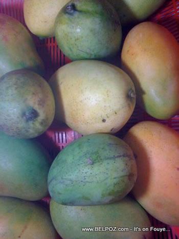 Mangoes From Haiti