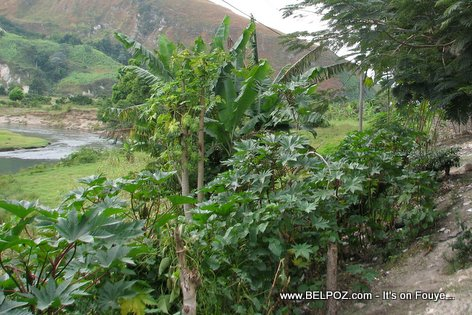Fleuve Artibonite, Haiti