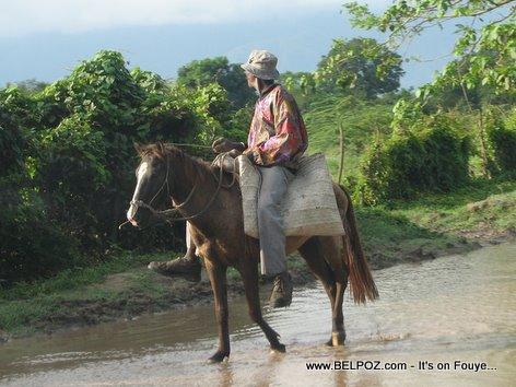 Man On A Mule - Crossing The River - Trou Du Nord Haiti