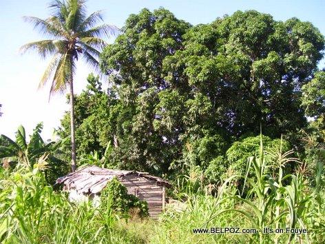 ANDEYO Haiti - LAKOU LAKAY - Little House on the Countryside