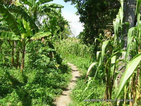 Haiti Countryside Mauric Haiti