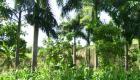 Countryside of Haiti